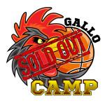 Gallo-con-soldout